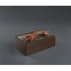 Caja Corfú